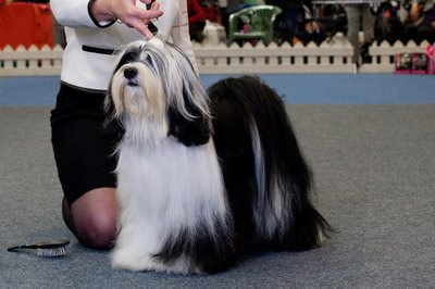 Best Veteran (Sunday, 24 May 2015) - Winners of the International Dog Show in Hamina (Finland), 23 - 24 May 2015