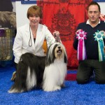 BOB Multi CH and Multi Winner Fabulous Teddy's Daniel Wanderer - Leevi -